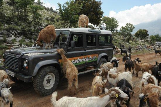 land rover great adventure - JEEP-SAFARI-CRETE
