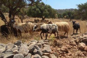 Excursions-Crete-Safari-Boating-09 (1)